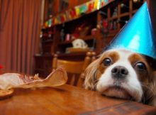 Birthday Wishes For Puppy