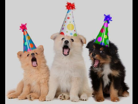 Birthday Cards For Dogs