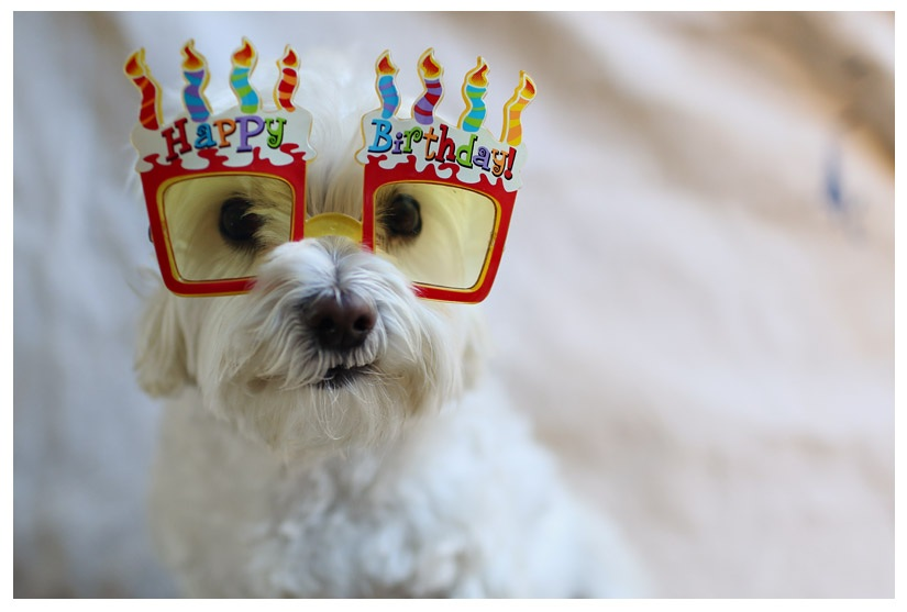 Cute Bday Wishes For Dogs, Puppies