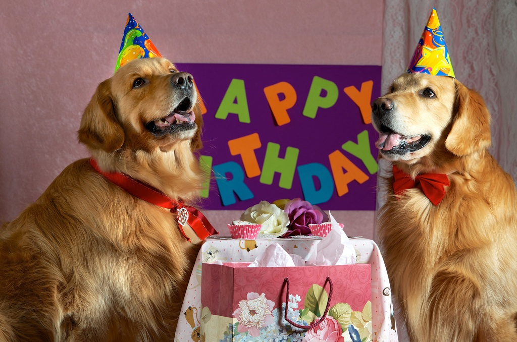 Birthday Sayings For Dogs