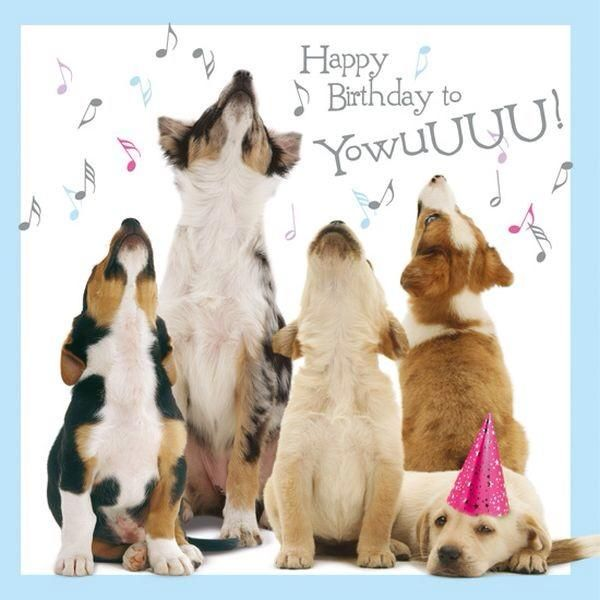Dogs Happy Birthday - Birthday Wishes, Cards, Messages, Greetings And Pics
