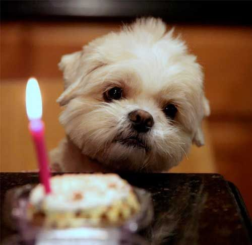 Cute Birthday Quotes For Puppies