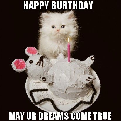 Happy Birthday Cat - Birthday Wishes, Images, Memes, Songs, And Greetings